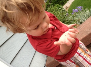 pill bug investigation